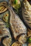 Farina di pesce arrostita sana con le verdure fotografia stock