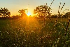 Farley herbeux Photographie stock libre de droits
