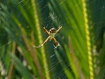 Farlig desorganiserad spindel för spindelrengöringsduk arkivbilder