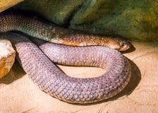 En orm for mycket