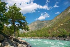 farlig flod 01 arkivfoto