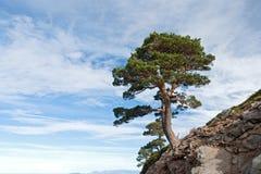 farlig lokaliserad tree för klippa Royaltyfria Foton