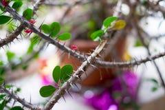 Farlig och taggig blomma arkivfoton