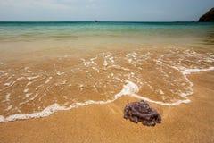 Farlig purpurfärgad manet på perfekt strandkust, med havet på H royaltyfria foton