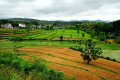 Farm. China Southern farms, hilly areas, planting rice, corn Stock Photography