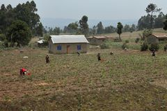 Farm and agriculture in Tanzania stock photography