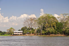 Farm in the Amazon Jungle Royalty Free Stock Photo