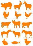 Farm animal. Set of farm animal shapes Stock Images