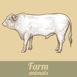 Farm animal bull. Royalty Free Stock Photography