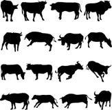 Farm Animal Cattle Royalty Free Stock Photo