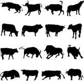 Farm Animal Cattle Stock Photos