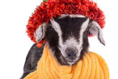 Farm animal goat isolated Stock Photography