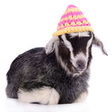 Farm animal goat isolated Royalty Free Stock Photos