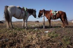 Farm animal in Grassland in inner mongolia Royalty Free Stock Photo