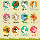 Farm animal heads isolated,. Cat dog horse pig cow goat turkey chicken goose duck pigeon Royalty Free Stock Image