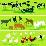 Farm animal illustrations Stock Photography