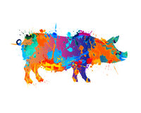Farm animal. Pig. Splash paint Stock Photos