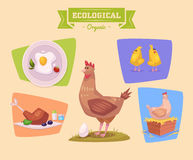 Farm animal and products made out of them. Chiken Royalty Free Stock Photo