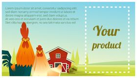 Farm animal and Rural landscape background with chicken Stock Images