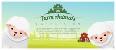 Farm animal and Rural landscape background with sheep Stock Photos