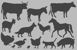 Farm Animal Silhouettes. A collection of farm animal silhouettes created in Adobe Illustrator.  This collection includes images of cattle, cows, donkey, goats Royalty Free Stock Images