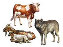 Farm animals vector illustration