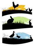 Farm animals Stock Images