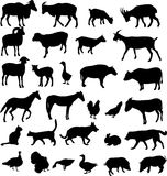 Farm animals. Collection of farm animals silhouettes Royalty Free Stock Image