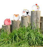 Farm animals. Ranking of domestic farm animals by the use of dietary Royalty Free Stock Image