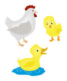 Farm Animals Royalty Free Stock Photo