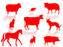 Farm animals Stock Photo
