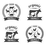 Farm animals badges Stock Photos