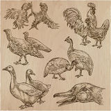 Farm animals, birds - an hand drawn vector pack, collection. Royalty Free Stock Photo