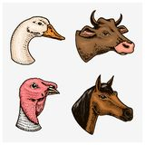 Farm animals and birds. Head of a domestic turkey gander cow. Logos or emblems for signboard. Set of icons for the menu. Engraved hand drawn in old sketch stock illustration