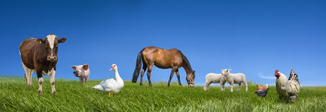 Farm Animals Collection Royalty Free Stock Photos
