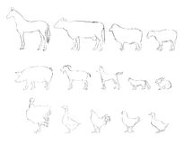 Farm animals collection. Hand drawn  illustration. Stock Photo