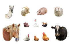 Farm animals collection isolated on white
