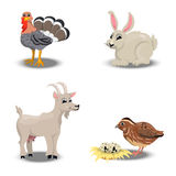Farm animals collection. Trendy vector set of a happy turkey for thanksgiving Celebration Design, rabbit for easter, goat and quail. Farm animals collection Stock Photography