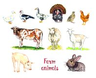 Farm animals collection, white domestic and south american muscovy duck, goose, turkey, quail and chicken, red cow, white sheep