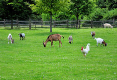 Farm animals. Different farm animals eating grass on a meadow Royalty Free Stock Photo
