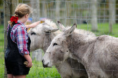 Farm Animals - Donkey Stock Photos
