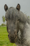 Farm Animals - Dutch Draft Horse Stock Images