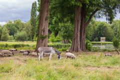 Farm animals in the English Garden Stock Images