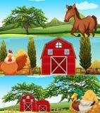 Farm animals on the farm Royalty Free Stock Photography