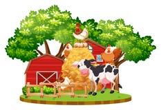 Farm animals on the farm Stock Photos