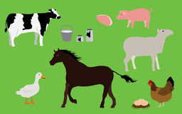 Farm Animals and Farm Products Collection Stock Photo