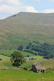 Farm animals field barn tree Mallerstang Cumbria. View across the Mallerstang Valley in Cumbria, England looking towards Mallerstang Edge and High Pike Hill. In Stock Photo