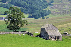 Farm animals field barn tree Mallerstang Cumbria. View of a traditional stone built field barn with an adjacent tree and several farm animals, mainly sheep. Some Royalty Free Stock Photos