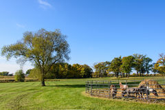 Farm Animals on a Field Next to a Tree Stock Photography