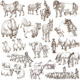 Farm animals. Full sized hand drawn illustrations. Stock Photo